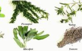 Многолетние пряные травы