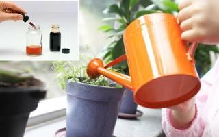 Польза йодного удобрения для комнатных растений