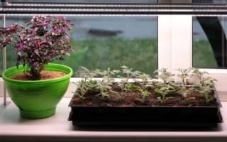 Как выбрать фитолампу для комнатных растений