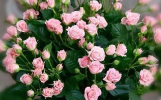 Маленькие розы фото