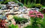 Цветы для альпинария фото и названия