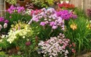 Общие правила формирования цветника или клумбы