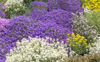 Многолетние ползучие растения