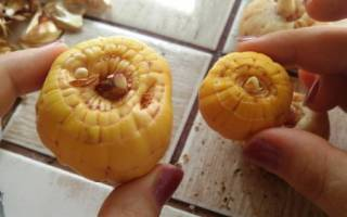 Подготовка к посадке луковиц гладиолуса