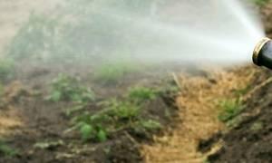 Надежная защита зимующих растений