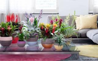 Полезные домашние растения для человека