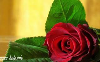 Видео«как продлить жизнь розам»