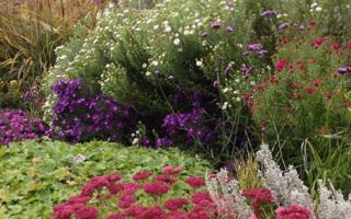 Многолетники цветущие в августе