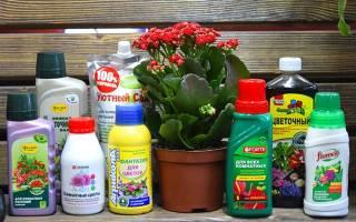 Чем удобрять комнатные цветы для быстрого роста