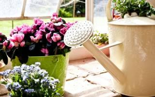Чем подкормить комнатные цветы домашними средствами