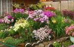 Правила создания цветущего всё лето цветника для ленивых