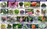 Какие нельзя держать комнатные растения дома