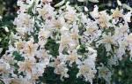 Лилии посадка и уход сорта и виды