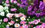 Какие цветники лучше делать из однолетников