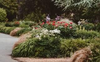 Многолетние цветущие кустарники фото и названия