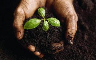 Чем полезен гумус для комнатных растений