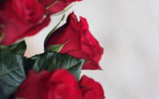 Бизнес план по выращиванию роз