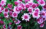Проникаемся вдохновением для создания цветника своими руками