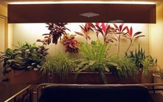 Как сделать искусственное освещение для комнатных растений