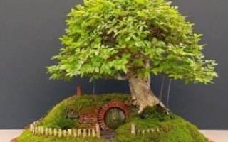 Секреты ухода за деревом бонсай