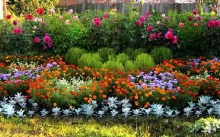 Полезные растения для клумбы посадка выращивание уход
