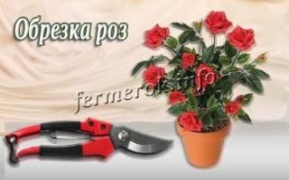 Инструменты для обрезки роз
