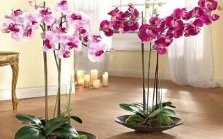 Единство дизайна комнатных цветов с фото