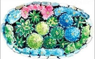 Расположение цветов на клумбе варианты
