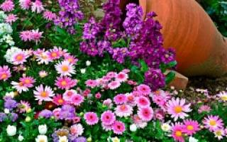 Как спланировать будущий цветник