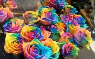 Как делают радужные розы