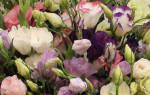Эустома лизиантус самый удачный аналог розы