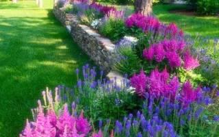 Описание сортов и видов цветов многолетников астильба