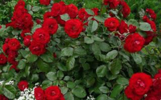 Цветы декоративные соседи