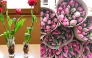 2 когда сажать луковицы тюльпанов на выгонку