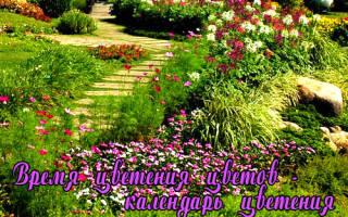 Календарь цветения для клумбы
