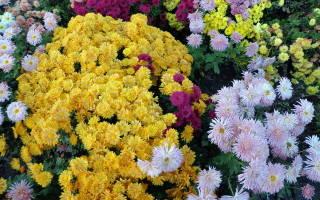Принципы формирования цветника