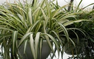 Комнатные растения не требующие солнечного света
