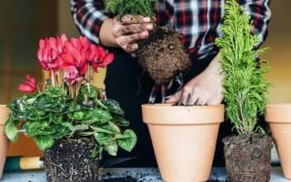 Самополив для комнатных растений