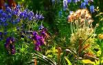 Цветы многолетники лучшая основа для создания клумбы