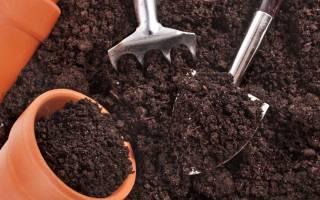 Как обеззаразить землю для комнатных цветов