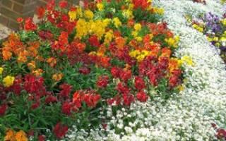 Зеленые растения для клумбы фото и названия