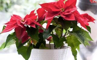 Комнатные растения с красными цветами