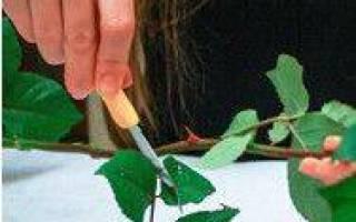 Как оформить букет из роз