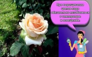Где на участке разместить клумбу с розами