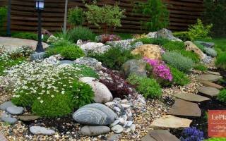 Популярные растения для альпийских цветников