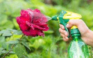 Видео борьба с вредителями роз