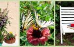 Хризантемы и дубки