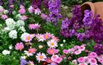 Цветы и травянистые растения для бордюров