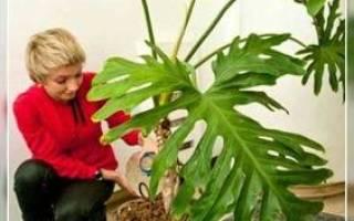 Подкормка комнатных растений осенью