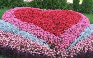 Клумба из луковичных непрерывного цветения